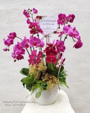 Milan Phalaenopsis Orchid , Phalaenopsis Orchid, 米兰蝴蝶兰, 成双成对, JB FLORIST,JOHOR FLORIST JOHOR BAHRU FLORIST MOUNT AUSTIN FLORIST SKUDAI FLORIST NUSAJAYA FLORIST MALAYSIA FLORIST KSL FLORIST TOPPEN FLORIST PARADIGM FLORIST MIDVALLEY SOUTHKEY FLORIST CITY SQUARE FLORIST 新山花店 柔佛花店 皇后花店 马来西亚花店 开张花篮 开幕花篮 开业花篮 乔迁之喜 生意兴隆 大展宏图 鲜花 假花 Kedai bunga johor bahru